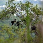 Monos-bosque-guayaquil